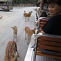20150720-54-night safari.jpg