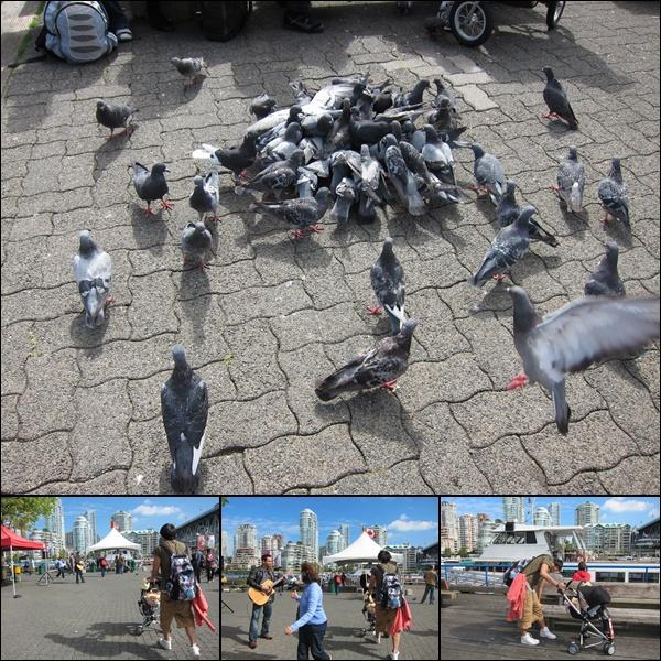 0914-8-超積極的鴿子.jpg