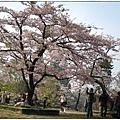 0325-65-櫻王.JPG