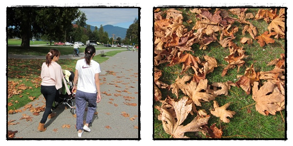 0917-5-滿草地的楓葉.jpg