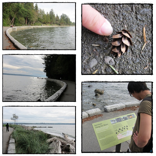 0917-39-有許多小生物的海邊.jpg