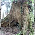 0325-43-往林務局的一景.JPG