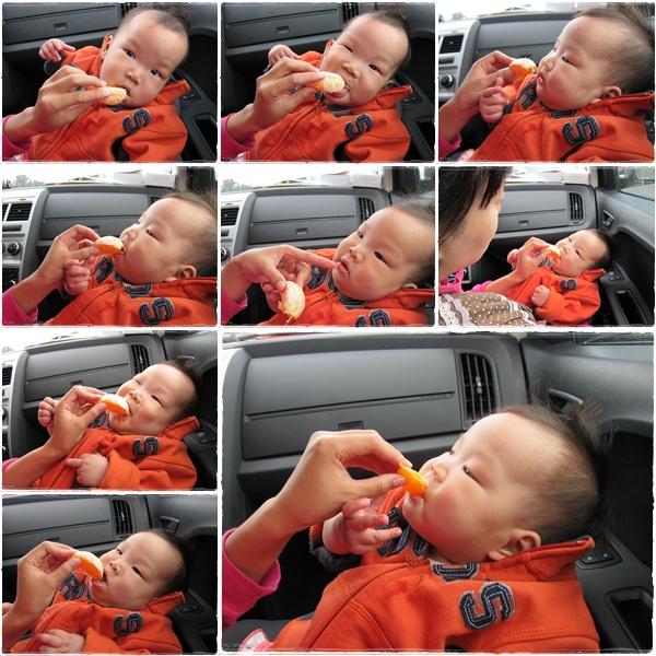 1003-16-小綠豆第一次吃橘子.jpg
