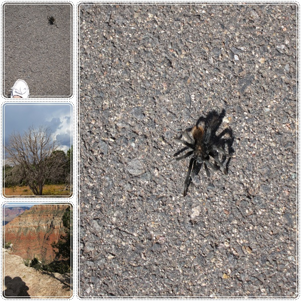 1003-9-蜘蛛.jpg