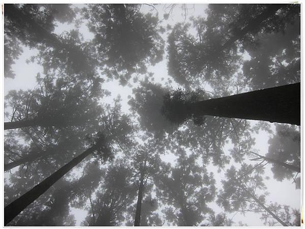 0326-25-往天空衝.JPG