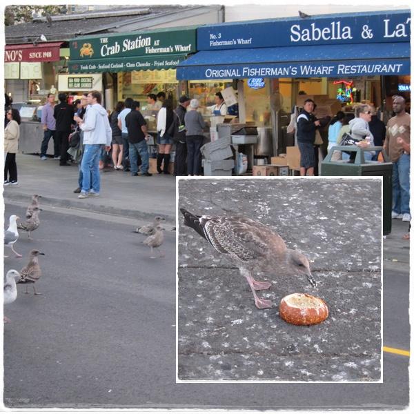 1011-17-麵包與鳥.jpg