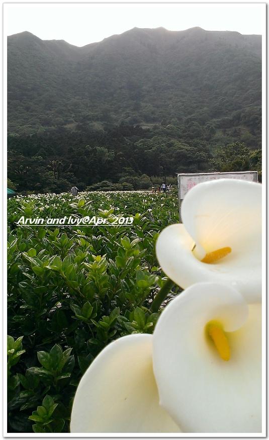 竹子湖 033