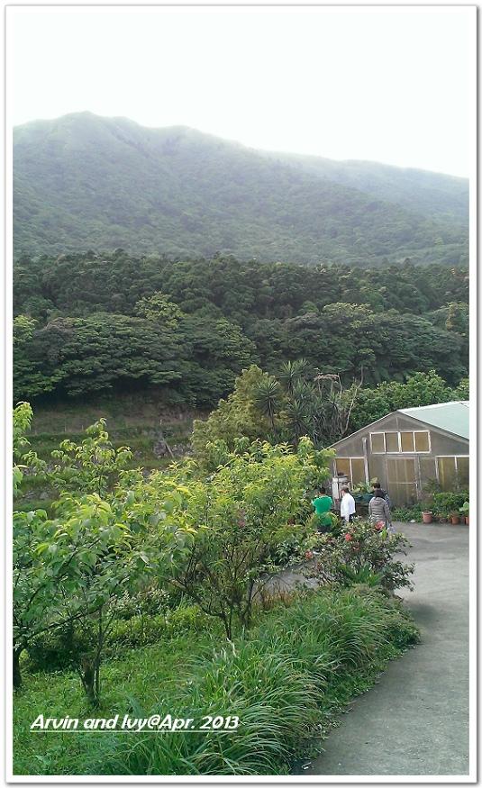 竹子湖 042