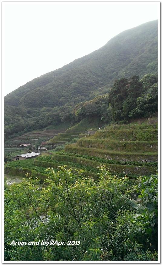 竹子湖 043