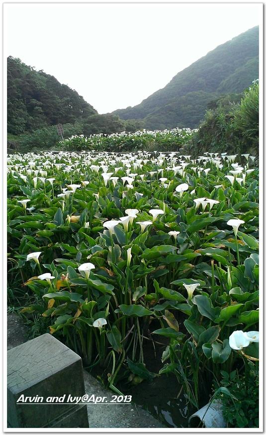竹子湖 045