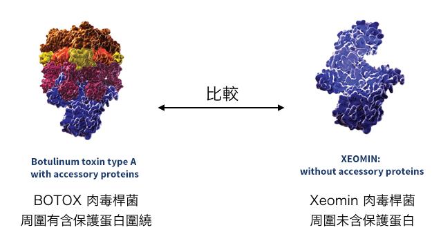 肉毒桿菌比較圖botox-dysport-xeomin2.png