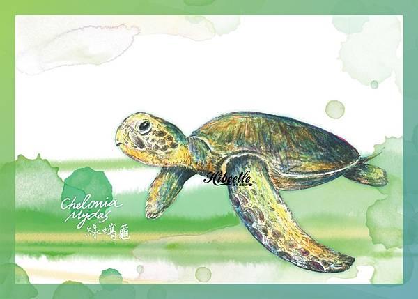 E  綠蠵龜