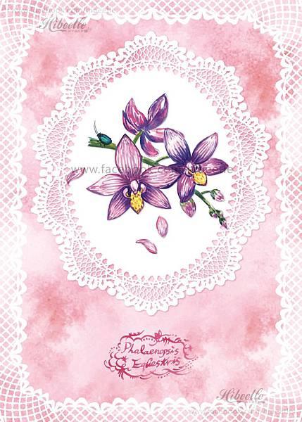 C 桃紅蝴蝶蘭