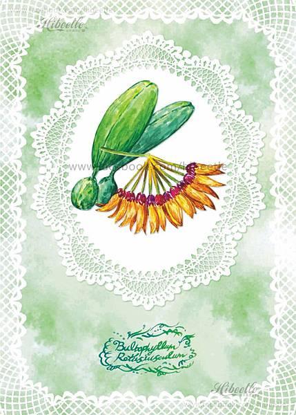 F 黃萼捲瓣蘭
