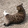 我的貓背也很美吧