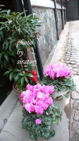 難得在小巷子中看到如此鮮豔的花兒