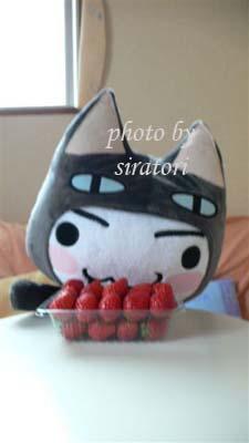 這是誰的草莓呀?