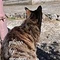幫喵拍照他一定會先給我看貓背