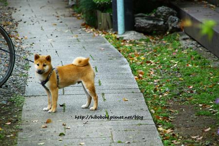 臉還是小狗臉,不過腿好長啊!