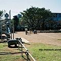 公園裡爸爸跟孩子傳接球