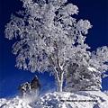 攀爬上愛情樹的兩人身邊霧白一片,那是風將雪吹起形成的風吹雪。