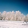 雪山山頭處處可見如此美麗的銀白世界。