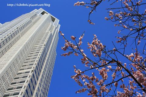 梅花與都廳