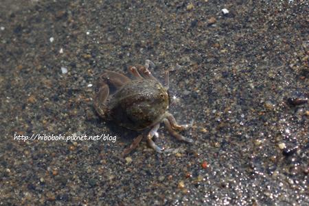 螃蟹第一號
