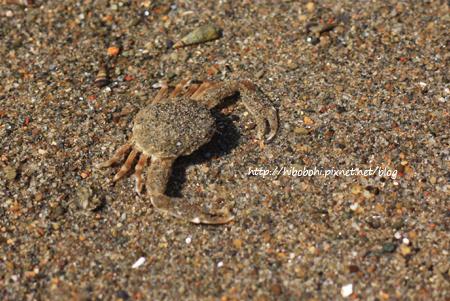 螃蟹第二號