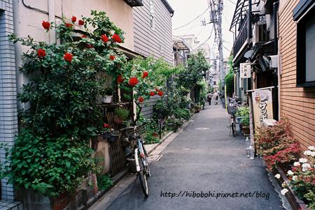 紅玫瑰與綠樹,讓巷子充滿生氣。