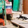 瘦瘦的小黑貓