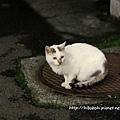 旅館附近的貓咪