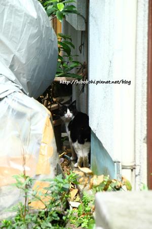 揮別上一隻貓沒多久,馬上就遇到第二隻貓