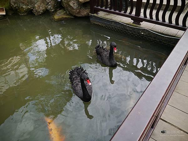 1021122 新埔南園 154-watermark.JPG