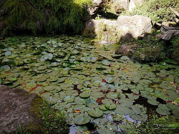 1021122 新埔南園 164-watermark.JPG