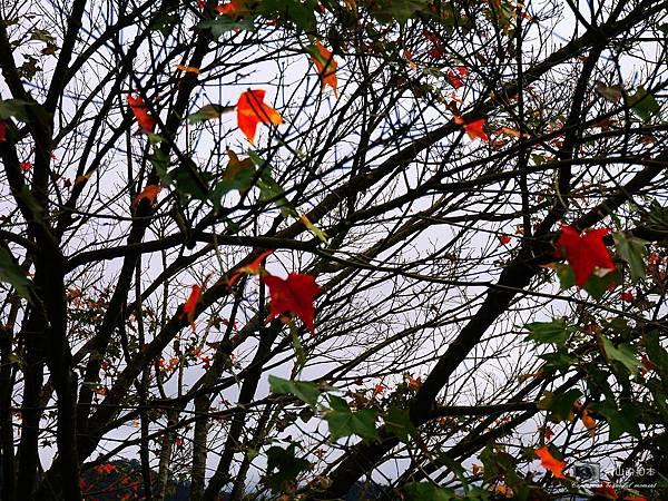 1021216 拱北殿與蘭陽博物館(pixnet)_029-watermark.JPG