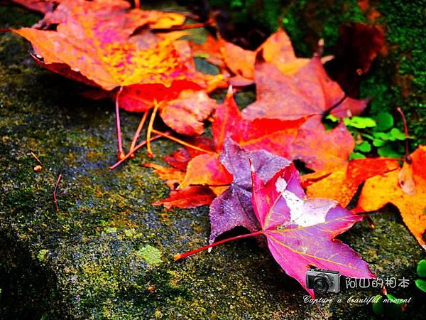 1021216 拱北殿與蘭陽博物館(pixnet)_030-watermark.jpg