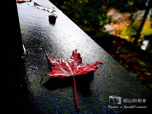 1021216 拱北殿與蘭陽博物館(pixnet)_036-watermark.jpg