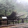 1051024 嘉義阿里山(PIXNET)042.jpg