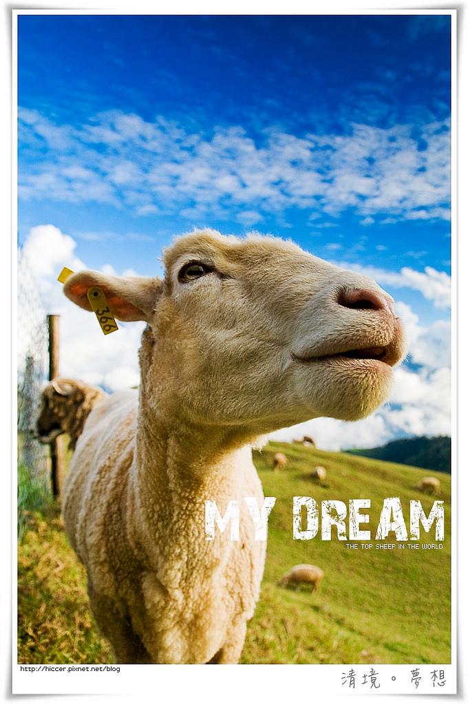 IMG_0879清境綿棉羊.jpg