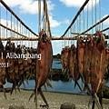 蘭嶼 飛魚季