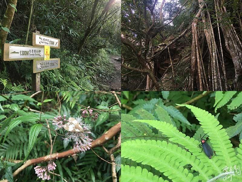 大禮步道上的植物.jpg