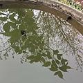 水裡的大蝌蚪.jpg