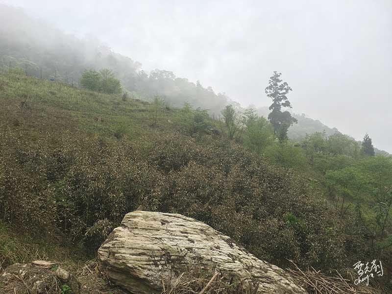 站在勿忘民宿轉身看走來的山頭景色,真的好美.jpg