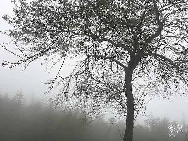 霧氣瀰漫的大同部落.jpg