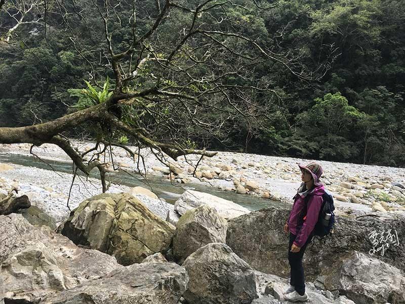 立霧溪邊往回走了,大小石頭交疊,路線算清楚.jpg