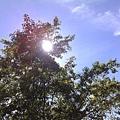 大太陽.jpg