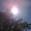 大太陽2.jpg