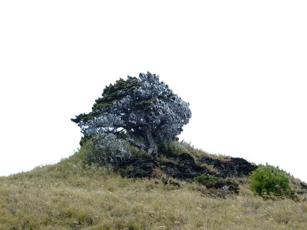 一顆樹放大