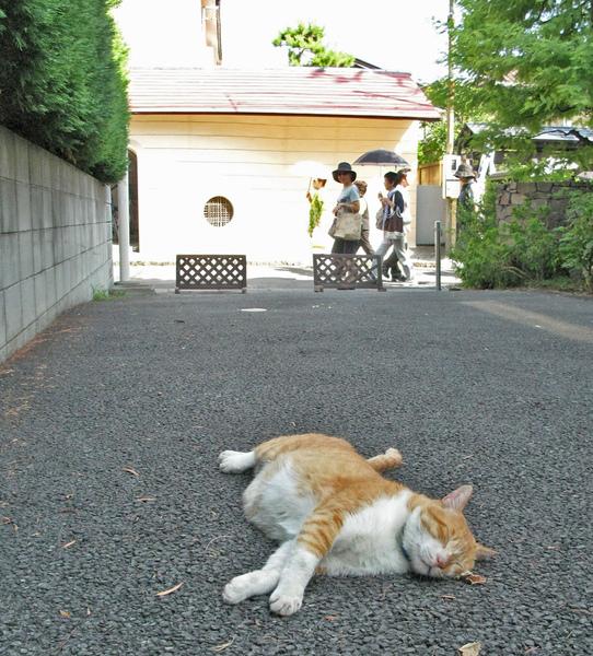 熱鬧之外‧小町通‧貓.jpg